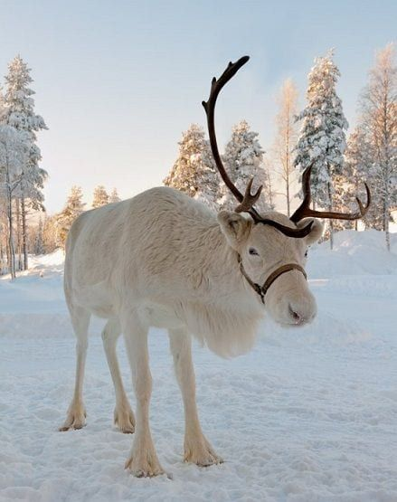 white reindeer Christmas games Missguided